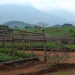 Pépinière - Malawi-23