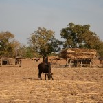 Valorisation des résidus de culture - Burkina Faso-1