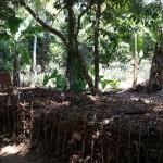 Valorisation des résidus végétaux - Sri Lanka-24
