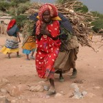 Transport du bois de chauffe - Dire Dawa (Ethiopie)