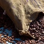 Cacao 2 (f+¿ves ferment+®es s+®ch+®es)-1