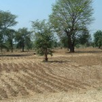 Valorisation des résidus de culture - Malawi-21