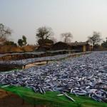Environs de Dwangwa 1 (Malawi)