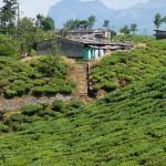 Environs de Valparai (Inde)