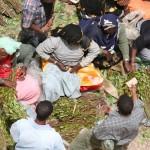 Marché au khat - Harar (Ethiopie)